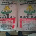 Jual Pupuk NPK 15-15-15 Phoskaplus di Medan