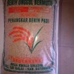 Jual Benih Padi Unggul Bersertifikat di Medan