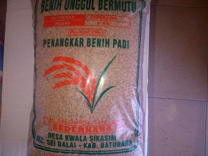 jual benih padi di aceh
