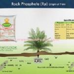Jual Pupuk Rock Phosphate (RP) Peru di Medan