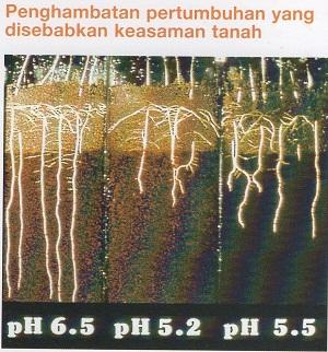 Penghambatan Pertumbuhan yang disebabkan keasaman tanah